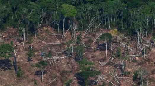 Amazonas-brasilero